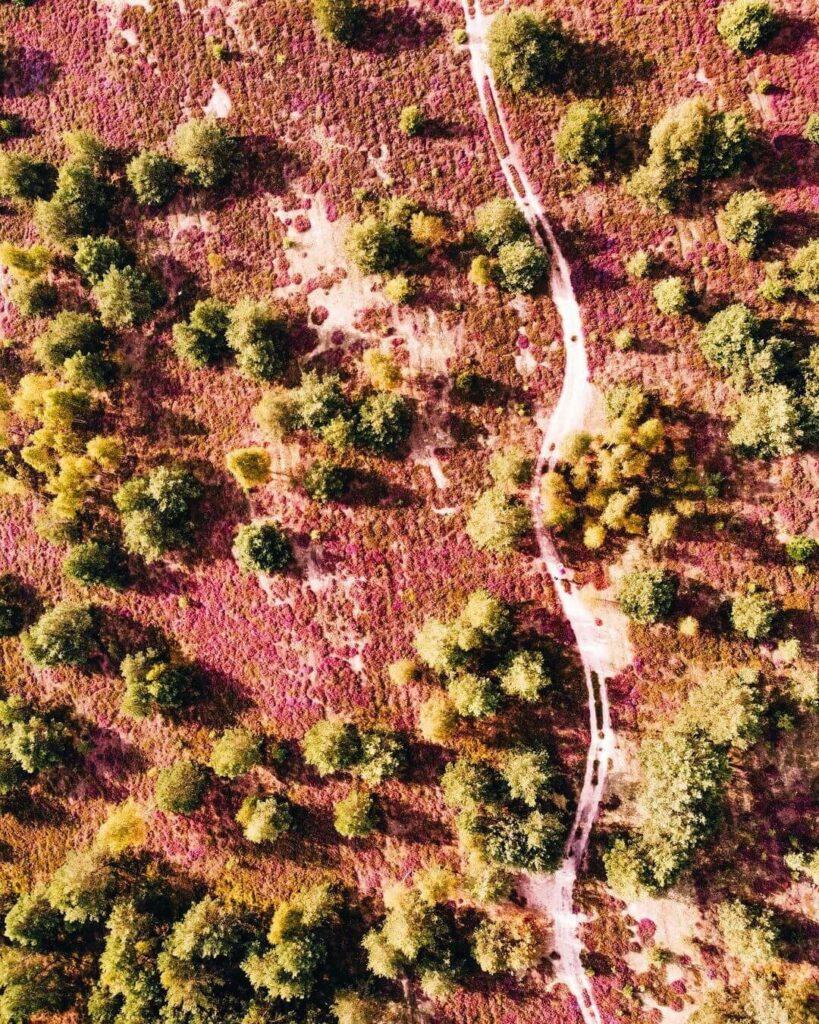 Вересковое поле под Варшавой или польский прованс